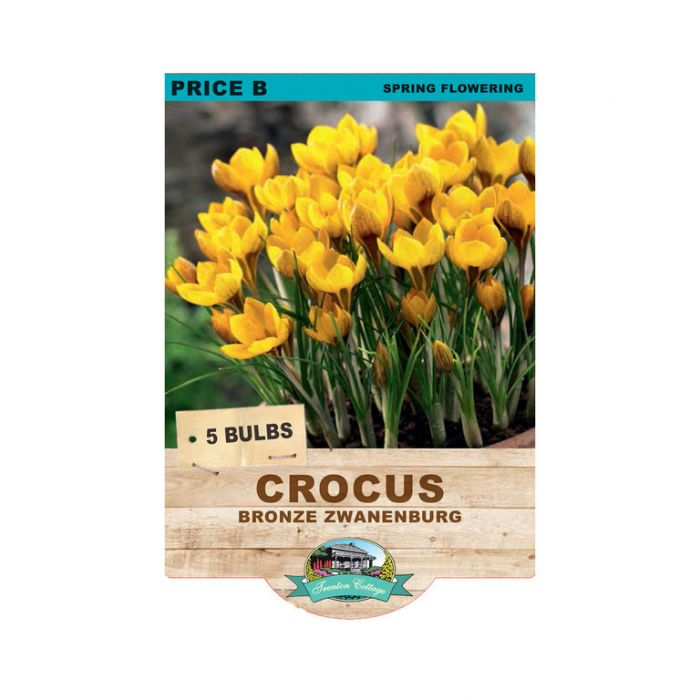 Crocus Bronze Zwanenburg  ] 9315774071783 - Flower Power