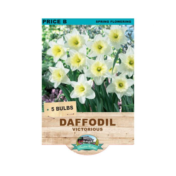 Daffodil Victorious  ] 9315774071813 - Flower Power