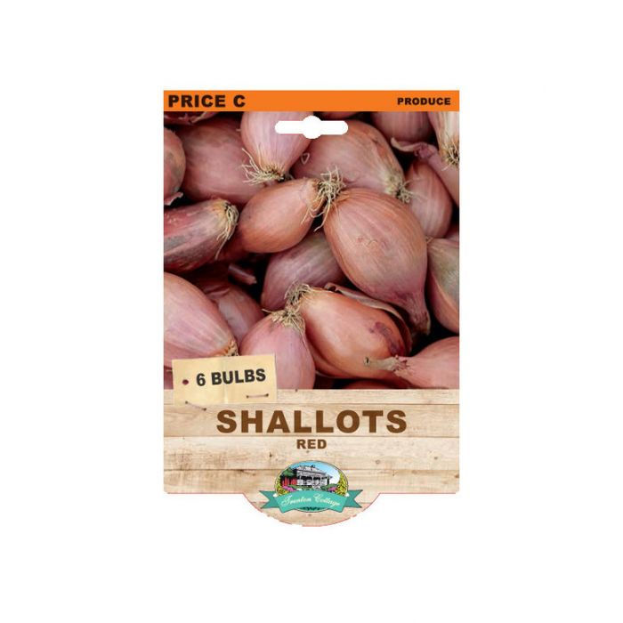 Shallots Red  ] 9315774071912 - Flower Power