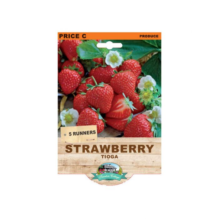 Strawberry Tioga  ] 9315774071967 - Flower Power