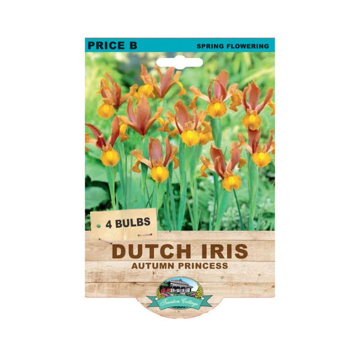 Dutch Iris Autumn Princess  ] 9315774073404 - Flower Power
