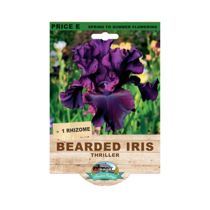 Bearded Iris Thriller  ] 9315774073510 - Flower Power