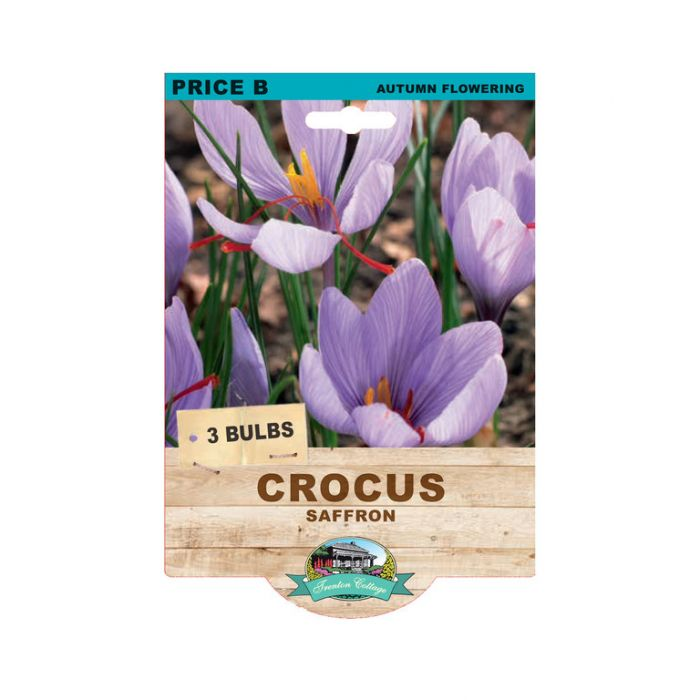 Crocus Saffron  ] 9315774074289 - Flower Power