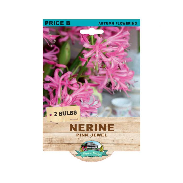 Nerine Pink Jewel  ] 9315774074340 - Flower Power