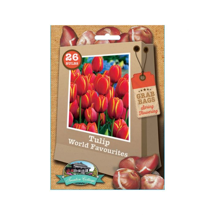 Tulip Worlds Favourite  ] 9322099012315 - Flower Power
