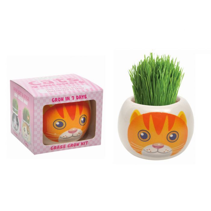 Grass Hair Kit Cats - Marmalade  ] 9324190096072 - Flower Power