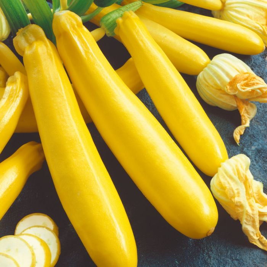 Zucchini Goldmax  ] 9328796077633 - Flower Power