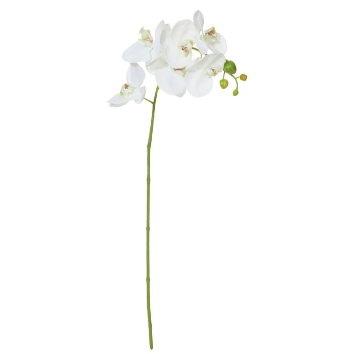 Artificial Phalaenopsis Orchid White  ] 9331460276096 - Flower Power