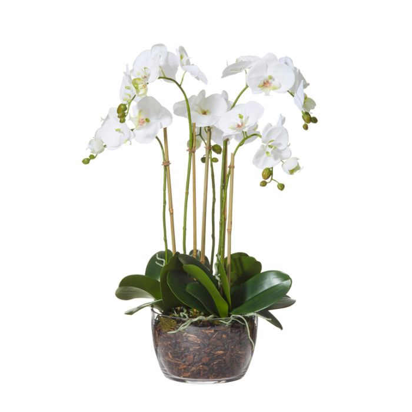 Artificial Phalaenopsis Bowl  ] 9331460287450 - Flower Power