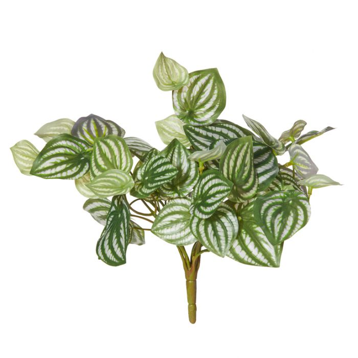 Artificial Watermelon Peperomia Bush  ] 9331460288631 - Flower Power
