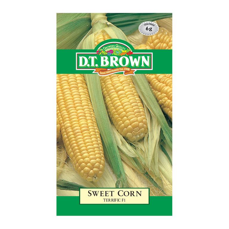 D T Brown Sweet Corn Terrific F1