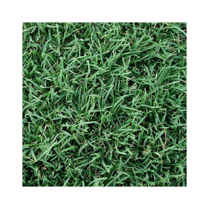 Couch Common Turf  014540