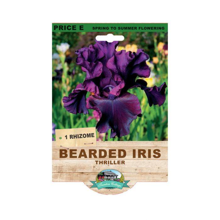 Bearded Iris Thriller  9315774073510