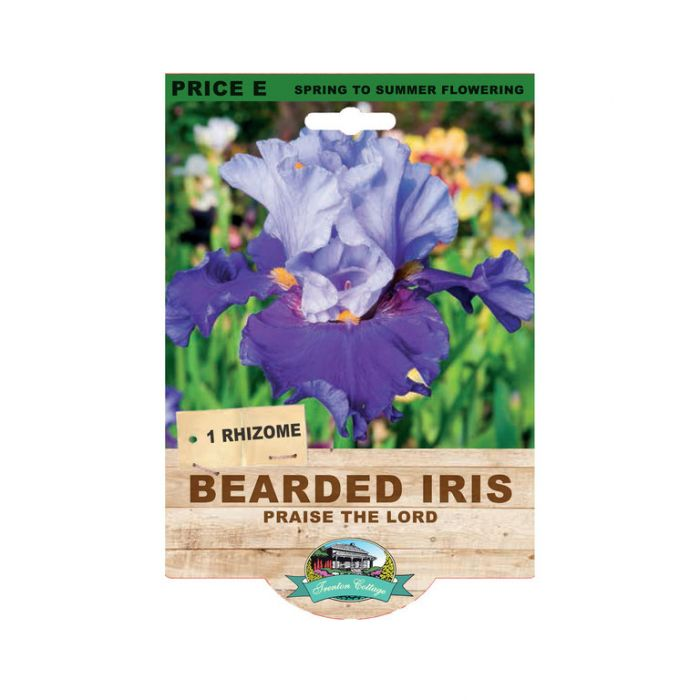 Bearded Iris Praise The Lord  9315774073527