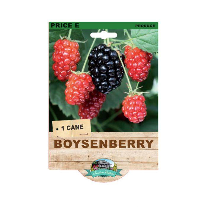Boysenberry Thornless  9315774073640