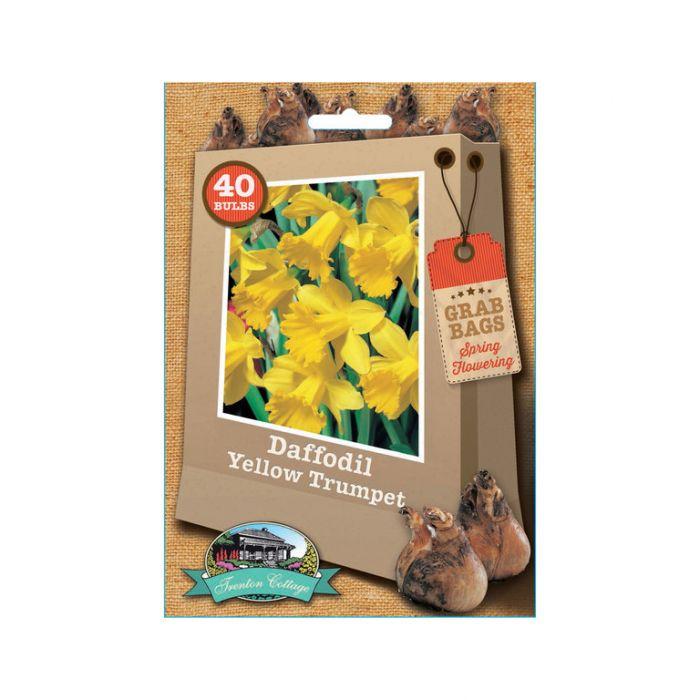 Daffodil Yellow Trumpet  9315774030681