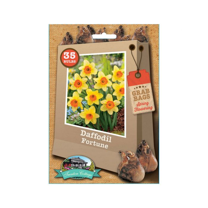 Daffodil Fortune  9315774030834
