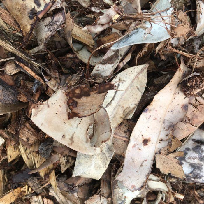 Leaf Mulch  496620
