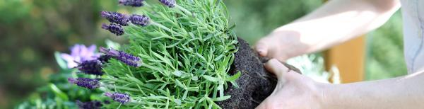How to repot plants