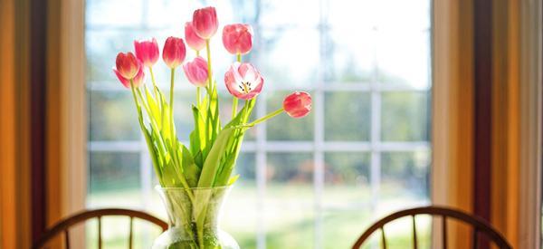 14 cut flowers to grow in your garden