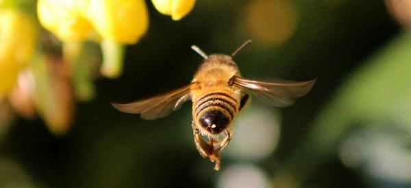 7 tricks for a bee-free garden