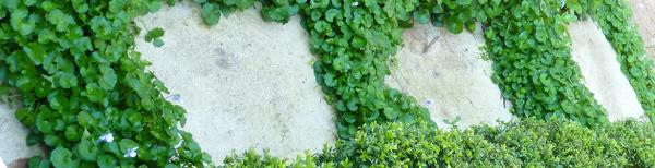Small space gardening: transforming your side garden