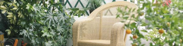 Privacy Plants for Balconies