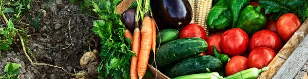 5 Simple Tips to Make your Vegie Patch a Success