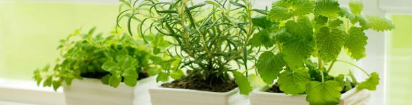 10 tips to starting your own indoor apartment herb garden