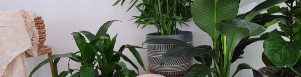 Gardening 101: Top indoor plants for the new #plantparent