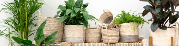 Storage baskets and indoor plants: a match made in heaven!