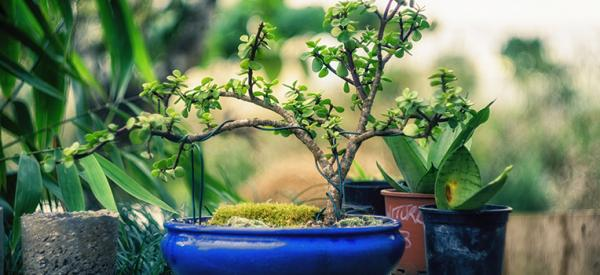 How to create your own bonsai