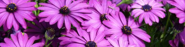 Maximising Flower Production