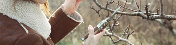 The ultimate guide on how to prune: When to prune shrubs and other plants