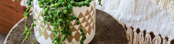 The insider's guide to styling indoor plants