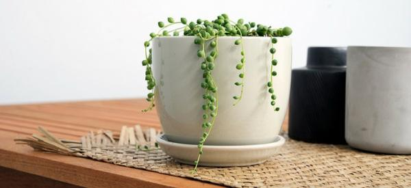 8 plants for your coffee table