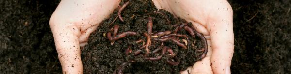 Fight food waste: How to make a worm farm to create compost