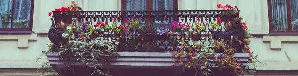 Gardening 101: caring for your balcony garden