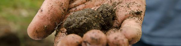 The one-step test for soil type