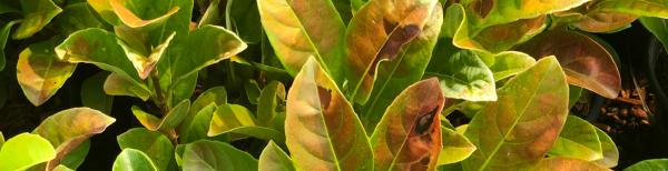 How to recognise, treat and prevent heat damage in plants