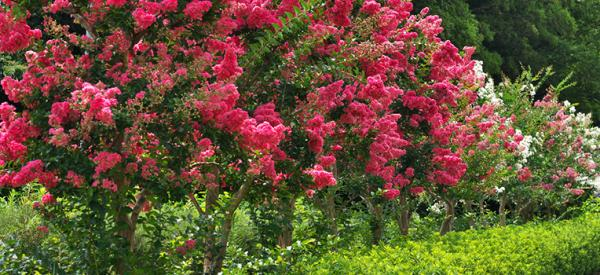Perfect pairs: Plants to grow under five favourite garden trees