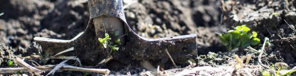 Preparing soil for autumn planting