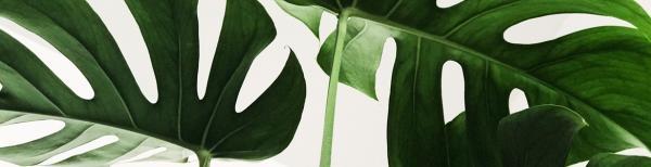 How to grow insta-worthy indoor plants