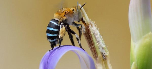 4 simple ways to attract native bees