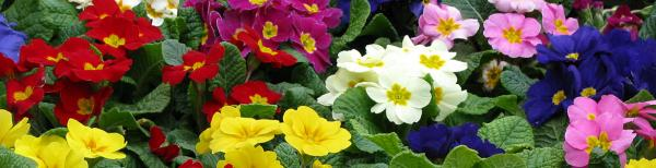Instant Colour with Flowering Annuals