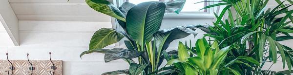 Gardening 101: Winter Indoor Plant Care