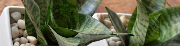 How to grow indoor plants in low light
