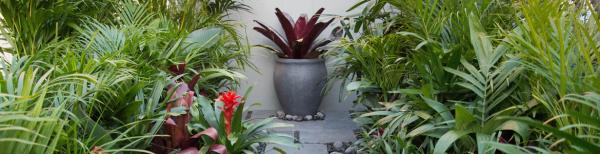 Statement plants for small garden spaces