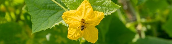 Why bees are critical for growing your own