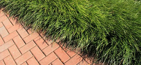 Border and Edging Plants